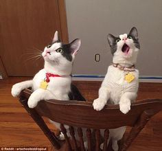 These cats can't believe what they've just witnessed and one of them is unable to hide its emotion