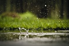 Rain Drops by Mike Freyder on 500px