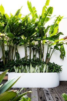 Tropical Backyard Landscaping, Tropical Patio, Tropical Garden Design, Backyard Garden Design, Modern Tropical, Outdoor Landscaping, Small Tropical Gardens, Pool Plants, Small Courtyards