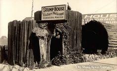 The Stump House Eureka California