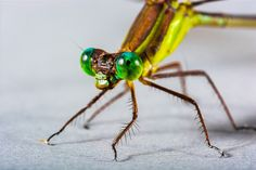 Dragonfly, Insect, Close, Eye, Green