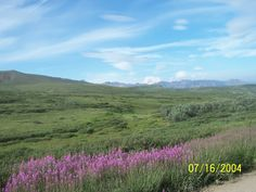 tundra, Denali National park