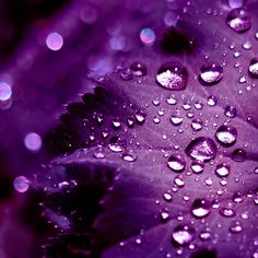 Purple Photography | Purple water ipad wallpaper to download