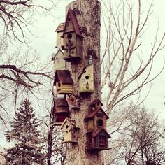 Covered this dead tree trunk with bird houses instead of cutting it down to a stump. So cool!