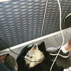 #dogproblems when I have to hang out with everyone's power cords while waiting for my connecting flight.