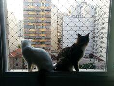 #cats #window