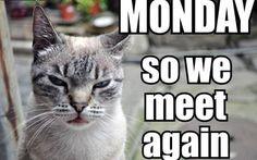 #MoveItMonday #mondaymotivation #caseofthemondays
