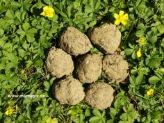 Mamagie: Anleitung Samenbomben Seed Bombs, Dog Food Recipes, Seeds, Vegetables, Green, Nature, Handmade, Kindergarten, Gardening