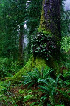 Ferns grow on an old growth tree jungle scenic copyright friendly photo