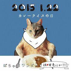 Cat Posters, Poster Ads, Typography Prints, Graphic Design Typography, Cat Design, Animal Design, Promotional Design, Calendar Design, Web Banner
