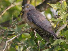 Zeilad Wildlife Sanctuary in Manipur, India