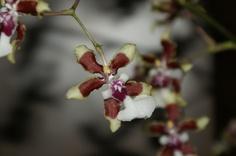 orquideas DFC.