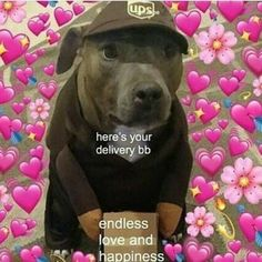 Dogs are charming animals. Dogs are not animal but they can be our pet and indeed our best friend. Their Delighting and funny reaction make them more adorable. We can also use their funny reaction in memes. Lets take a look at top 28 dog meme reaction. Memes Amor, Bf Memes, Funny Dog Memes, Meme Meme, Memes Lindos, Wholesome Pictures, Heart Meme, Cute Love Memes, Crush Memes
