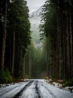 Among the pines ~