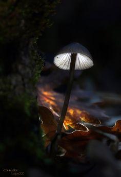 Mushroom by María Jesús López B.