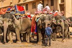 Amer Fort 004: The elephant will take you all the way to the fort. Amer Fort, Elephant Ride, Rajasthan India, Photography, Goa India, Photograph, Fotografie, Photoshoot, Fotografia