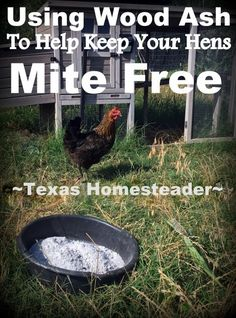 We use wood ash to reduce or eliminate mites on our chickens. We get happy hens … We use wood ash to reduce or eliminate mites on our chickens. We get happy hens using something that was previously just wasted. Cheap Chicken Coops, Portable Chicken Coop, Chicken Coup, Best Chicken Coop, Backyard Chicken Coops, Building A Chicken Coop, Chicken Runs, City Chicken, Chicken Garden