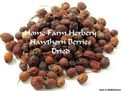 Hawthorn Berries, Dried, All Natural, Chemical Free, Order now, FREE shipping Home Farm Herbery constituents of the berry are flavonoids and oligomeric procyanidins. The berries contain more hyperoside than the leaves and flowers, and the leaves and flowers contain more vitexin rhamnoside than the berries. At Home Farm Herbery the whole berry is used as dried, crushed and/or powdered. Hawthorn berries are more often used to make tinctures than teas, smoothies and punches. May also be taken…