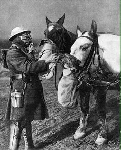 War horses WW1 with gas masks.