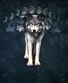 Animals Connected with Symbolic Moon Meanings -   Dog Bat Bear Wolf Owl Moth Cat Crab Hare Snail Dolphin Toad and Frog
