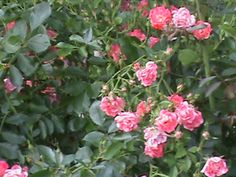 New Project – it can help you or someone that you know! Swarthmore College, Virtual Flowers, Pretty Roses, Philadelphia, Wordpress, Challenge, Canning, Check, Plants