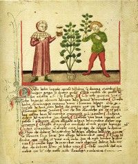 The Several Sages: The Late Middle English Herbal in its Genre, Manuscript and Printed Context - Medievalists.net--Full text Master's Thesis from the University of Utrecht