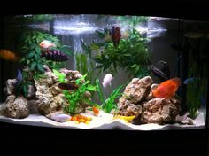 Image detail for -12 Beautiful Aquariums That Will Blow You Away! | Freshwater Aquariums