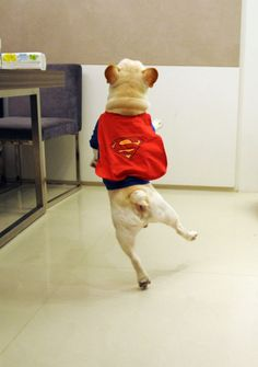 I could really use a dancing dog