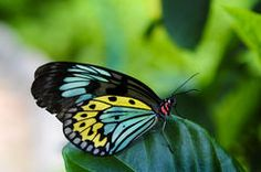 Butterfly And Flower - Download From Over 39 Million High Quality Stock Photos, Images, Vectors. Sign up for FREE today. Image: 27122598
