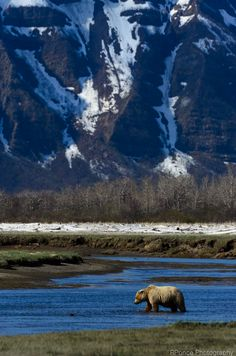Katmai Bath Time by Roderic Ponce, via 500px