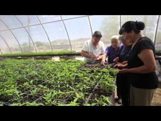 An overview of First Nations Development Institute's work in Native food systems, including with Santo Domingo Pueblo, Cochiti Pueblo and the Institute of American Indian Arts, all in New Mexico. This video was made possible by the Comcast Foundation with additional support from the W.K. Kellogg Foundation.