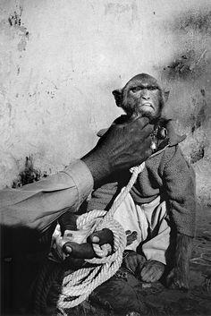 Fotograf M. Vanden Eeckhoudt: Tiere posieren nicht – Seite 7 | Reisen | ZEIT ONLINE