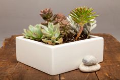 "From Auré Aura: Concrete Planter Centerpiece - 7"" White This centerpiece is thoughtfully designed and handmade throughout."