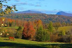 Purchase beautiful images from the Northeast Kingdom of Vermont! Vermont, Beautiful Images, Vineyard, Heaven, Mountains, Nature, Photos, Outdoor, Fence