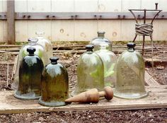 Green cloche were more desirable The Bell Jar, Bell Jars, Garden Cloche, Gardening Zones, Stone Path, Antique Glassware, Potting Sheds, Down On The Farm, Apothecary Jars