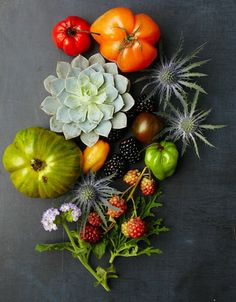 succulents, peppers & herbs