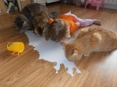 baby and cats love milk This child has a healthy self image if she think's she is a cat too!