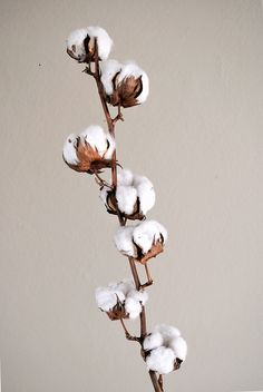 Health Benefits of Natural Organic Fabrics (II): Organic Cotton Fabric - Sheeba Magazine Art Floral, Deco Floral, Flowers Nature, Beautiful Flowers, Art Blanc, Cotton Plant, White Art, White Beige, Fabric Flowers