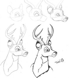 Buck Step by Step Drawing | How to draw a deer step by step :) (Bambi)