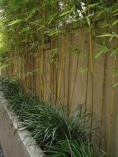 mooie smalle en groene oplossing voor een lelijke muur of schutting. Maar dan geen banmoe maar siergras
