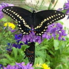 Florida Butterfly Garden: Selecting native plants to attract butterflies