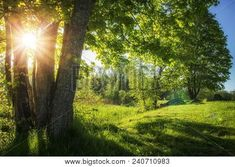 240710983 Countryside, Country Roads, Green, Plants, Image, Google Search, Plant, Planets