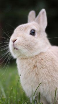Animal Rabbit Rabbits Mobile Wallpaper Rabbit Wallpaper, Iphone 6 Wallpaper, Mobile Wallpaper, Funny