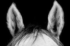 A l_ecoute (c) Jessica SEIDLER BOURDON 2017 #horse