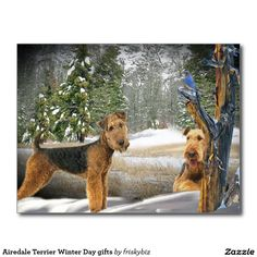 Airedale Terrier Winter Day gifts Postcard