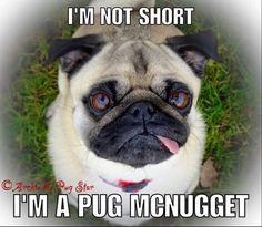 #pugs #dogs #retweet #pug #follow #like #puglife #dog #aww #funny #pugchat #cute #fun #Pugs #lol #pets #folloback #pugsdaily #puppy #humor