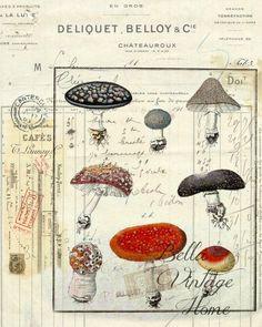 Botanical  Mushrooms II Print,  Pillow, Note Cards, Tea Towel