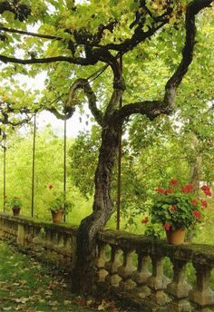 ~You can almost hear the birds & the ruffling leaves as the winds glide in… / #provence #gardens