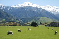 New Zealand Sheep Farm - Photo of Canterbury New Zealand at KiwiWise Canned Dog Food, Dry Cat Food, Canterbury New Zealand, New Zealand Holidays, Sheep Farm, Farm Photo, Sustainable Tourism, Venison, What Is Like