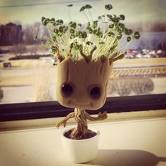Introducing chia Groot. Chia seeds planted in the top of a POP figure.